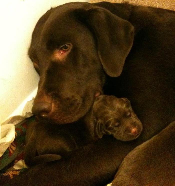 Coco with one of her puppies in her first litter.